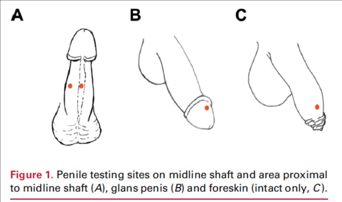 glans penis sensitivity