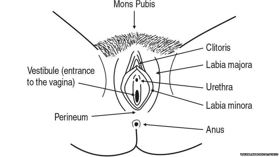 anus between and vagina bit