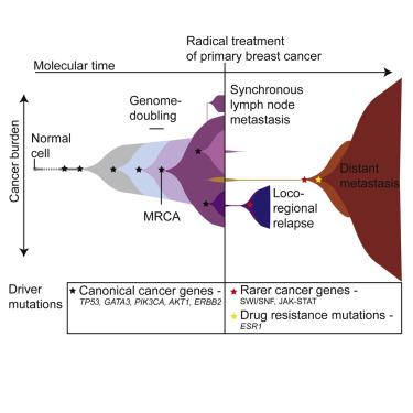 breast cancer genomic