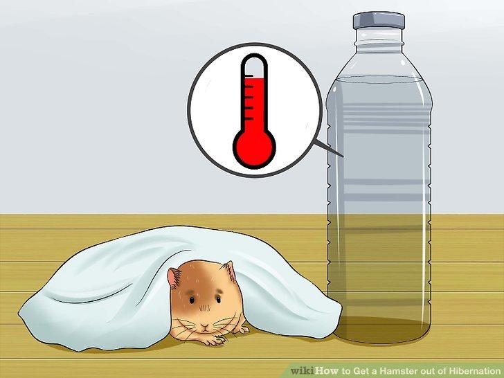 watter bottle hamster deep throats